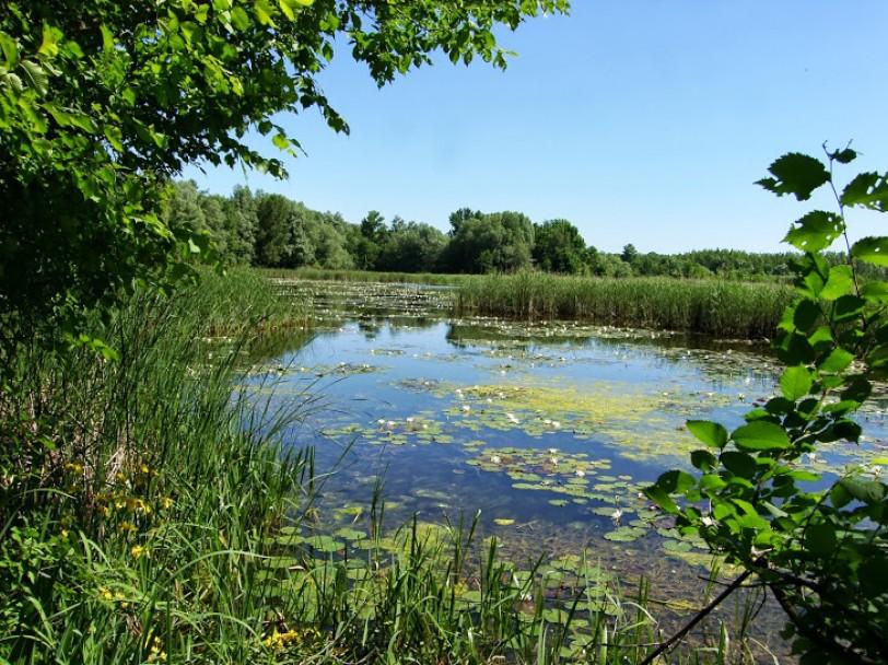Magyarország is elvesztette vizes élőhelyeinek döntő többségét.  Vizesélőhelyeink hiánya nagyban megnöveli a társadalom sérülékenységét ... 6d11e1e7ec